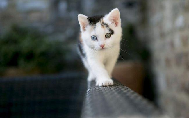 Je lijepa djevojka sa obojenim očima: malo šarm.