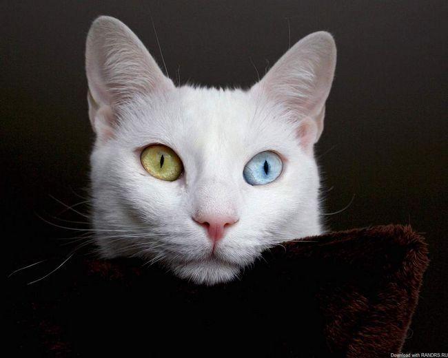 Opet, bijelo i pahuljasto i opet - drugim očima.