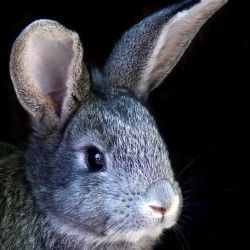 Chov králikov doma