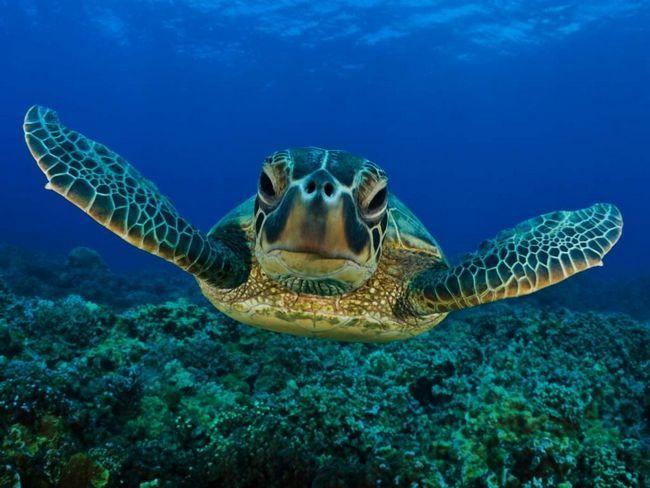Turtles - neke od najstarijih stanovnika naše planete.