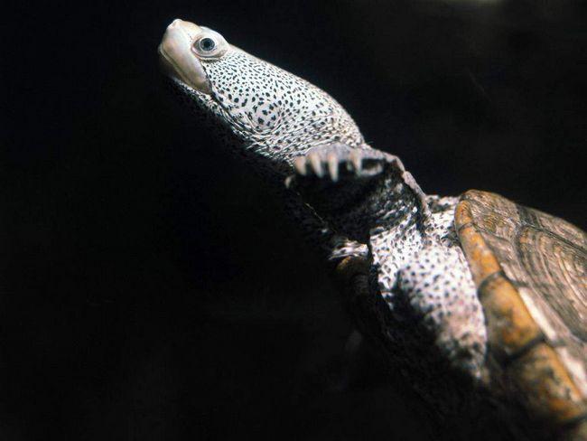Turtle - životinje jaja.