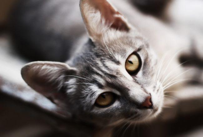 Редкие и красивые имена для кошек и котов