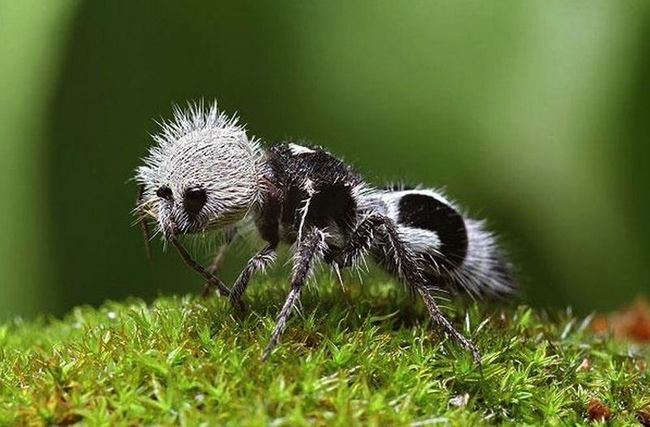 Редкие и удивительные животные