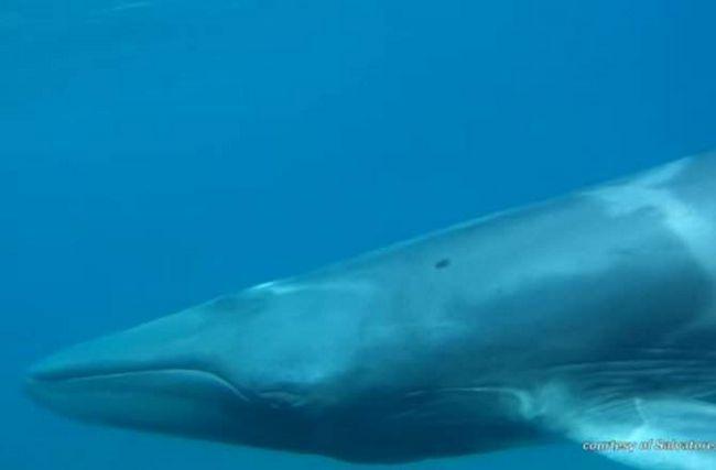 Naučnici uočili Omura je kita.