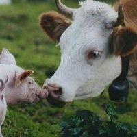 Реферат по животноводству