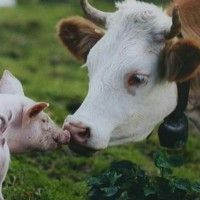 Zhrnutie hospodárskych zvierat