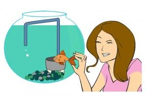 Рекомендации по уходу за аквариумом