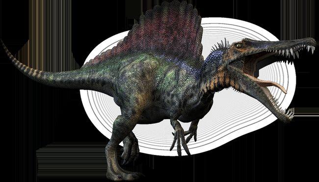 Spinosaurus (lat. Spinosaurus)
