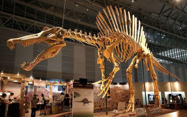 Spinosaurus kostur.