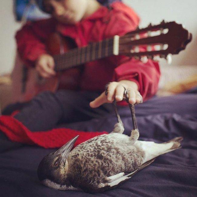 Upotrebu četrdeset nazivom Penguin - pravi ljubimac