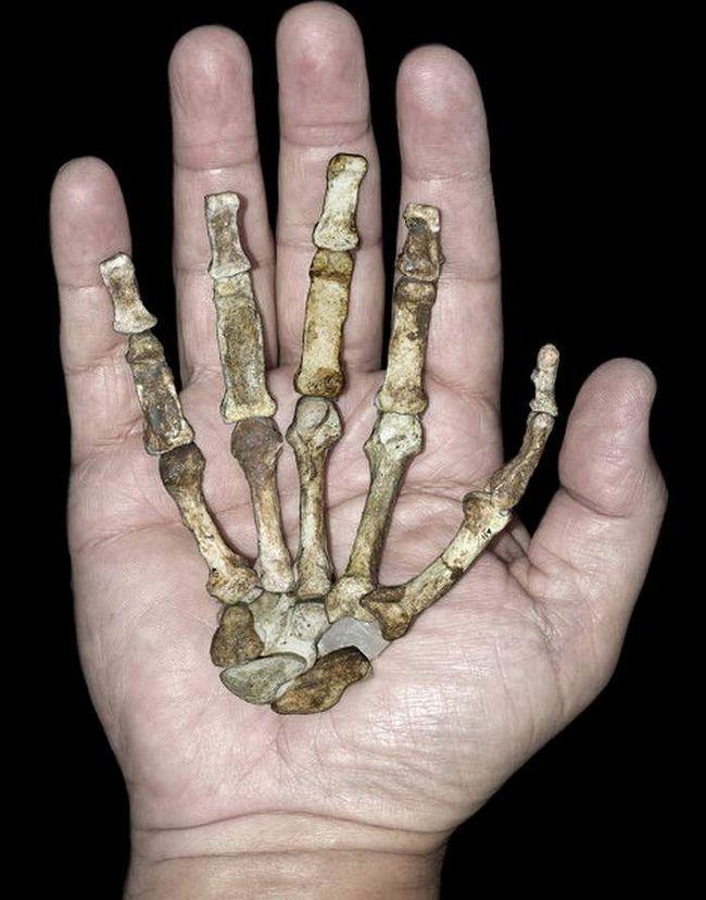 Ruka čimpanze savršeniji od ljudske ruke.