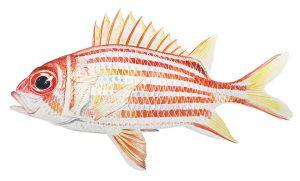 ribljih proteina