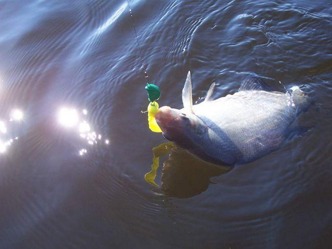 Ribolov za deverika - uzbudljiv doživljaj.