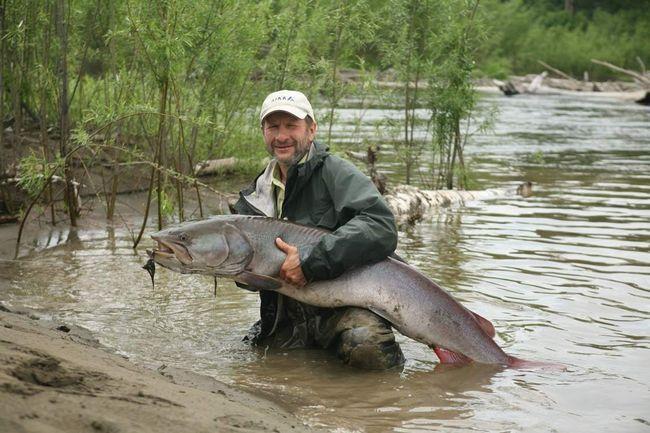 Industrijski ribolov za Taimen ne vodi, to uhvatio običnih ribara.