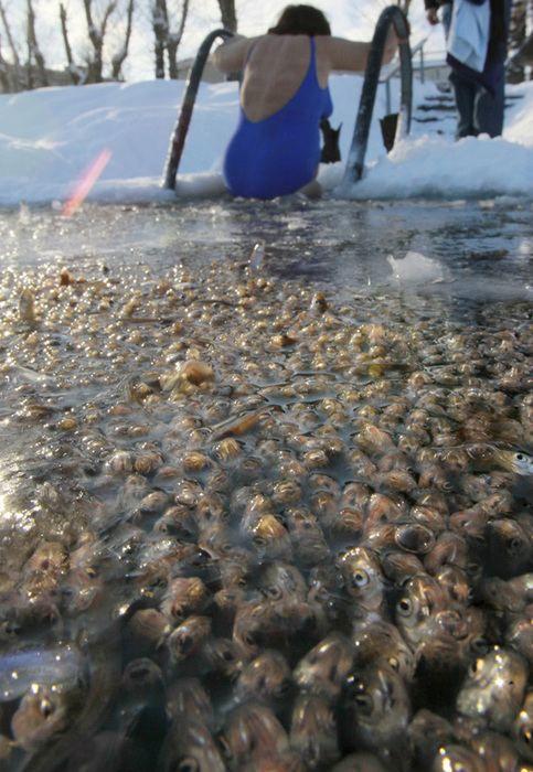 Ribe ugušio u ribnjacima u Sankt Peterburgu
