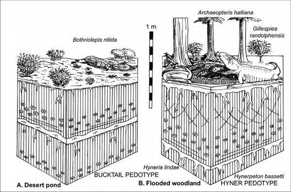Slika ilustrira dvije hipoteze konverzije ribe peraja u kandže zemaljske kičmenjaka: Left - amfibije predak pojavljuje iz ribnjaka sušenja u pustinji, desno - isto lov pretka u poplavnih voda. (Slika autora.)