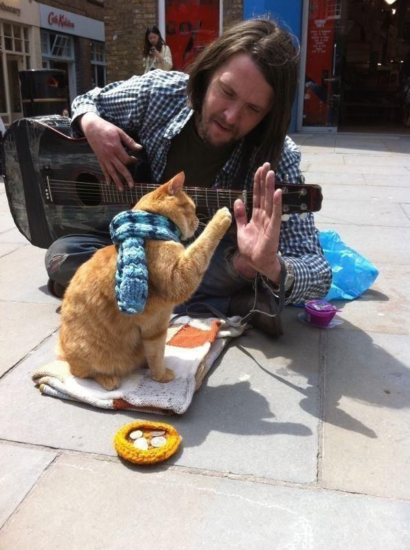 Đumbir mačka, Bob, koji je poznat u cijelom svijetu