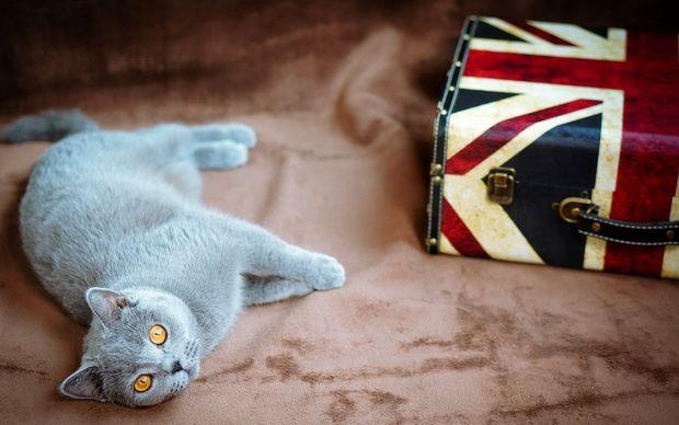 С кем оставить кошку на время отпуска?