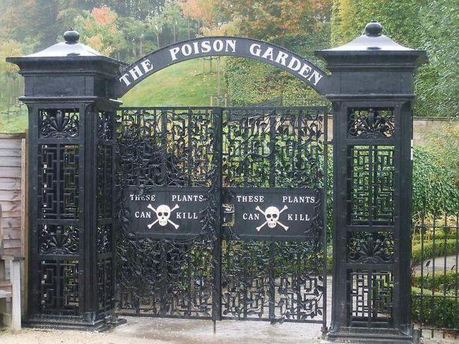 Alnwick vrt - vrt od najopasnijih biljaka