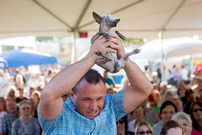 Najružniji pas na svijetu osvojio hiljadu dolara