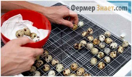 Incubator pentru prepelițe