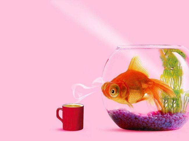 Благодаря продвижению научно-технического прогресса, содержание рыбок дома стало более реальным и доступным.