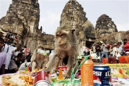 Tajland. majmun praznik