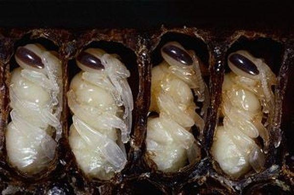 Самые популярные и необычные блюда из насекомых