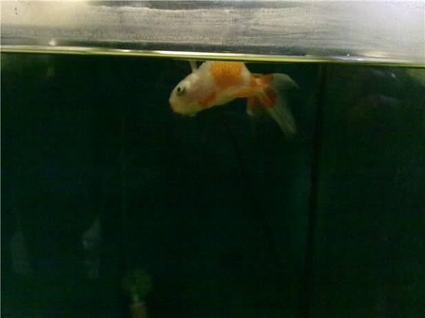mrtve ribe