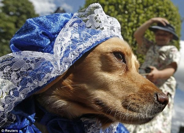 Самые стильные собаки одетые под дворян викторианской эпохи