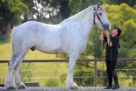Самый большой в мире конь