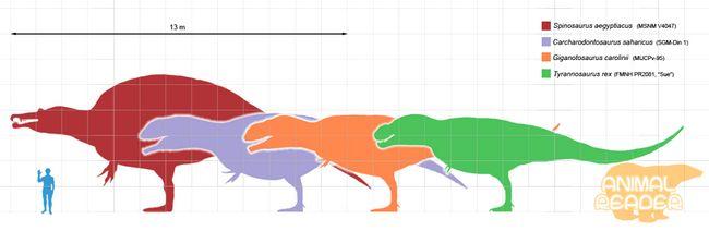 Dinosaur theropods (Theropoda)