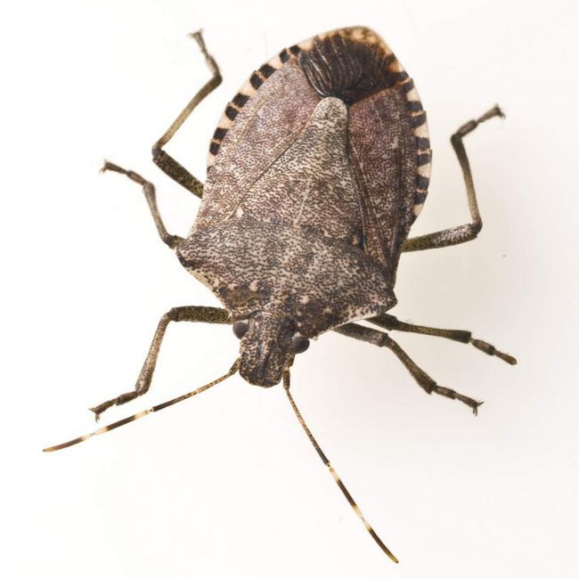 Bubamare, bube i mnoge druge vrste - svi članovi reda kornjaša.