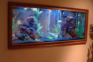 Санитары аквариума — рыбки, креветки, улитки, борющиеся с водорослями