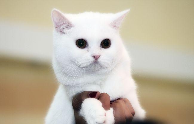 Briga za uši, oči i kandže mačića