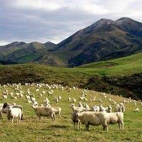 Poljoprivredne svijet