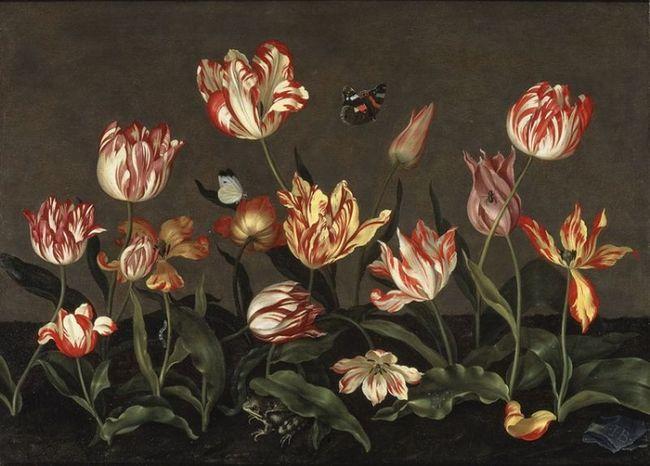 Semper augustus (август навсегда) - самый красивый тюльпан