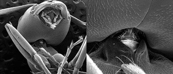 Шея муравья выдерживает нагрузку, в 5 000 раз превышающую вес тела насекомого