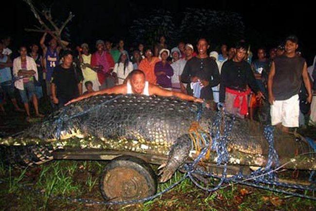 Šest metrů slané vody krokodýl byl nejdelší v jeho očích