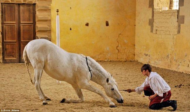 Škola za konje