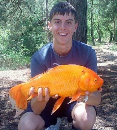 Natyanuvshayasya linija je obećano 16-godišnji student najmanje šarana. Nick Richards je bio šokiran kada je otkrio na svom hook 40 centimetara sija zlatnu ribicu.