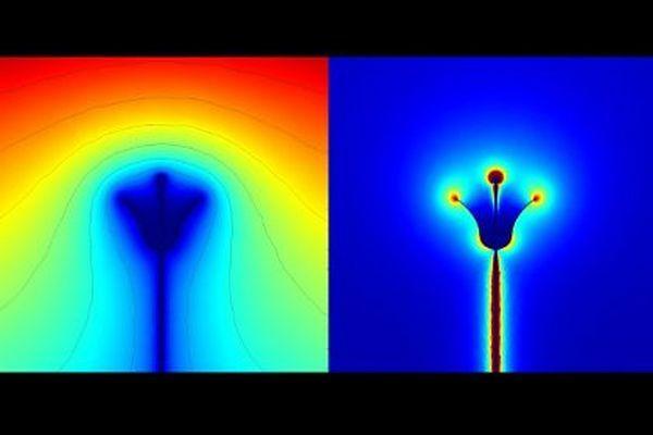Шмели способны ощущать электрический заряд цветов