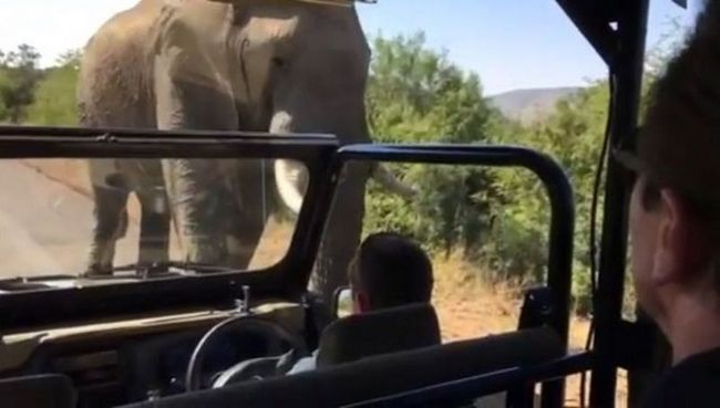 Шварценеггер снял на видео свое бегство от слона