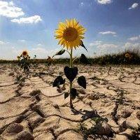 Система устойчивого ведения сельского хозяйства в условиях засухи