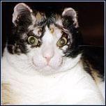 Scarlett - nejznámější kočka v Americe