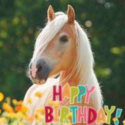 rođendan konj