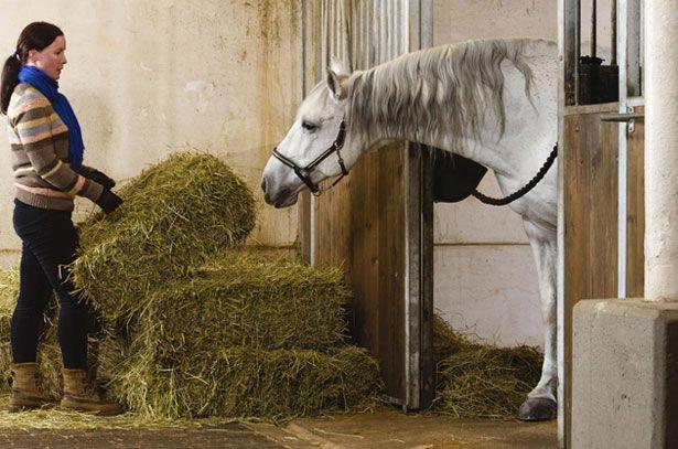 Ona drži sijeno za konja u štali