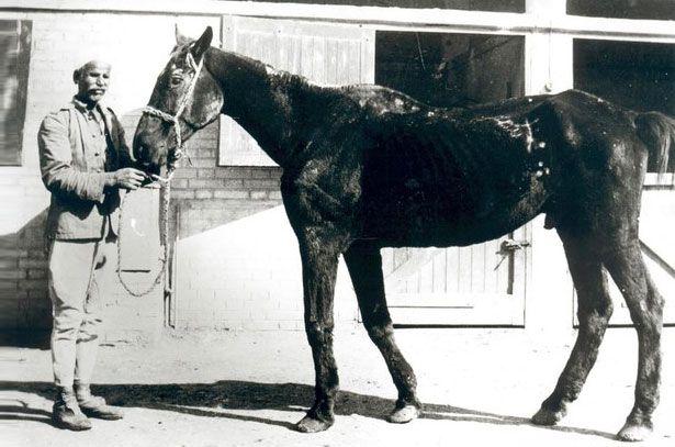 Stari konj po imenu Billy