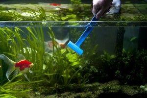 Скребок для аквариума. Чистим стекло правильно