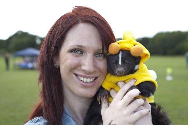 U Velikoj Britaniji, koji je održan izbor za mis za kućnog ljubimca tvorovi